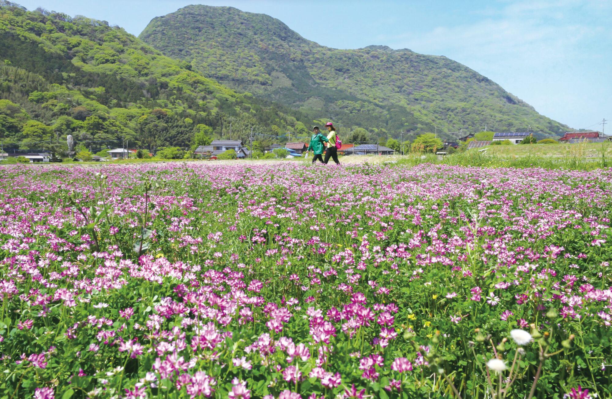 れんげ畑(春のオルレフェア)