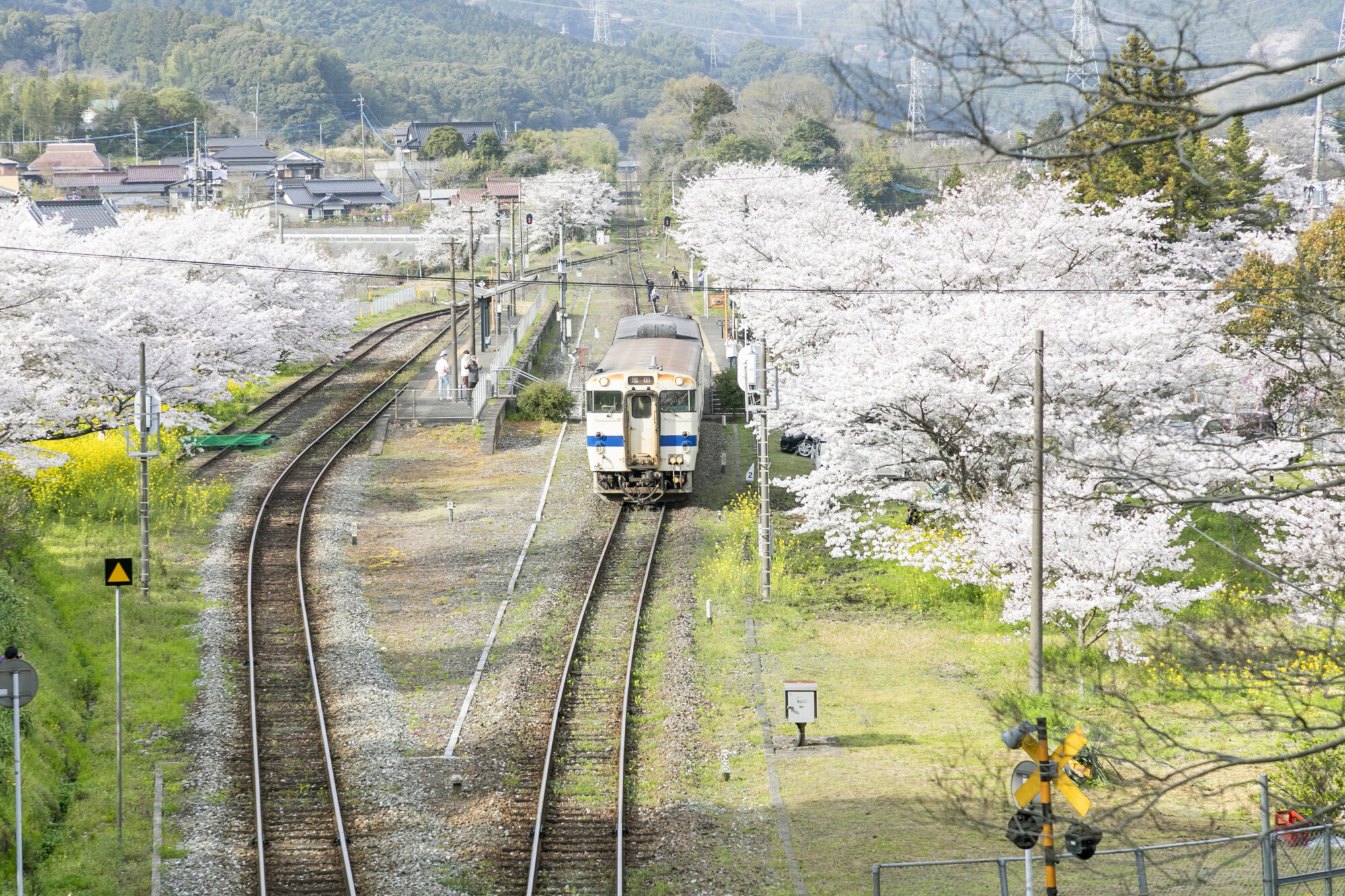 JR採銅所駅 桜と電車