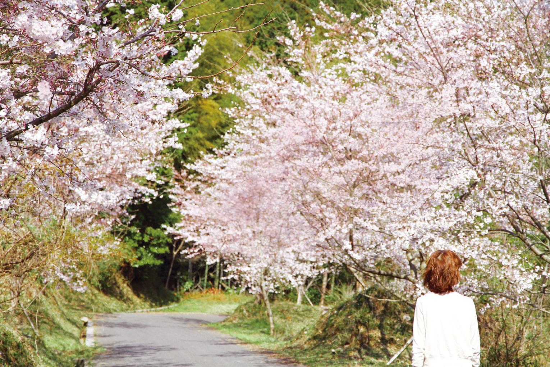 ⻑光円陣の滝桜公園の桜