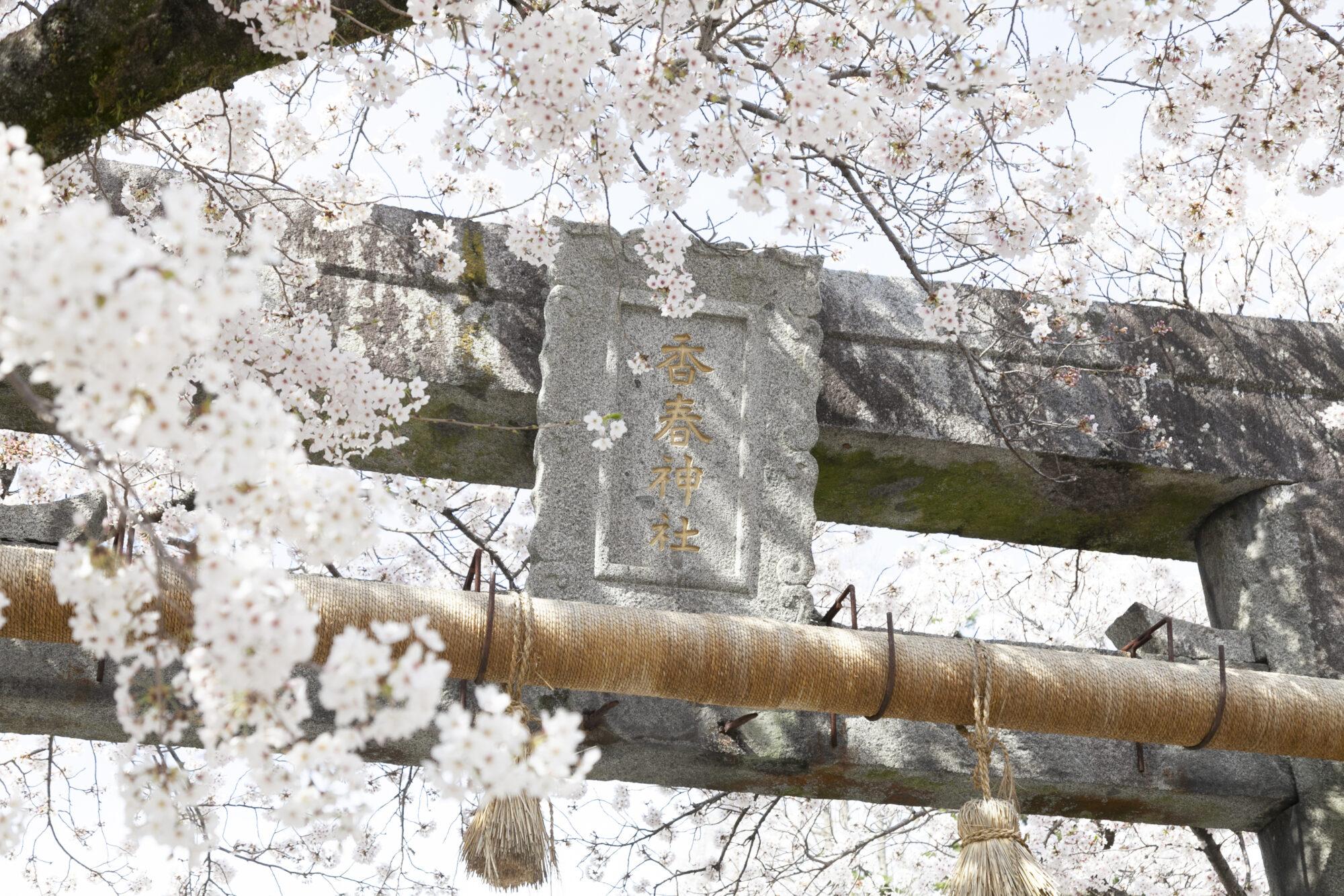 香春神社の桜と鳥居