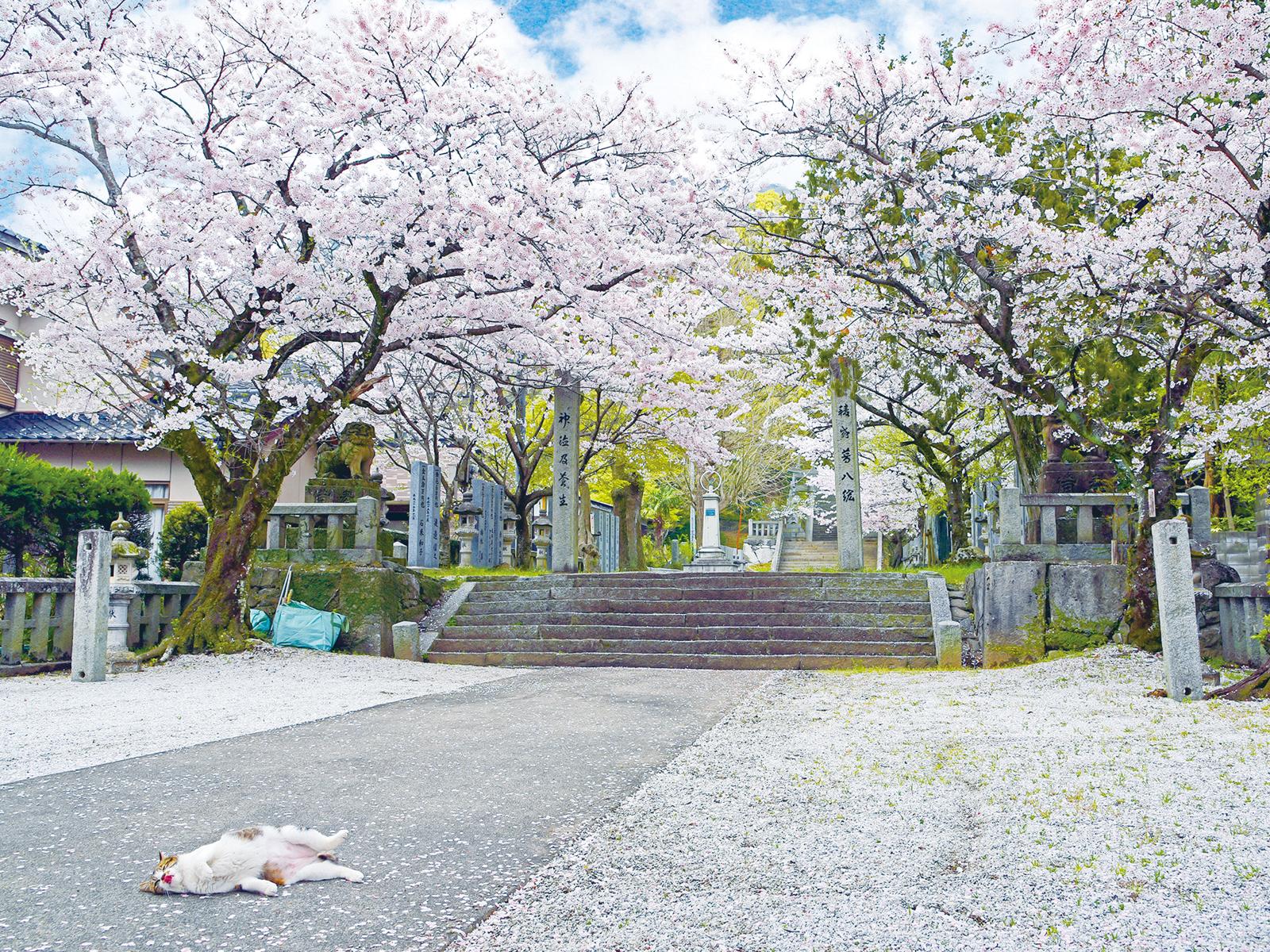香春神社の桜