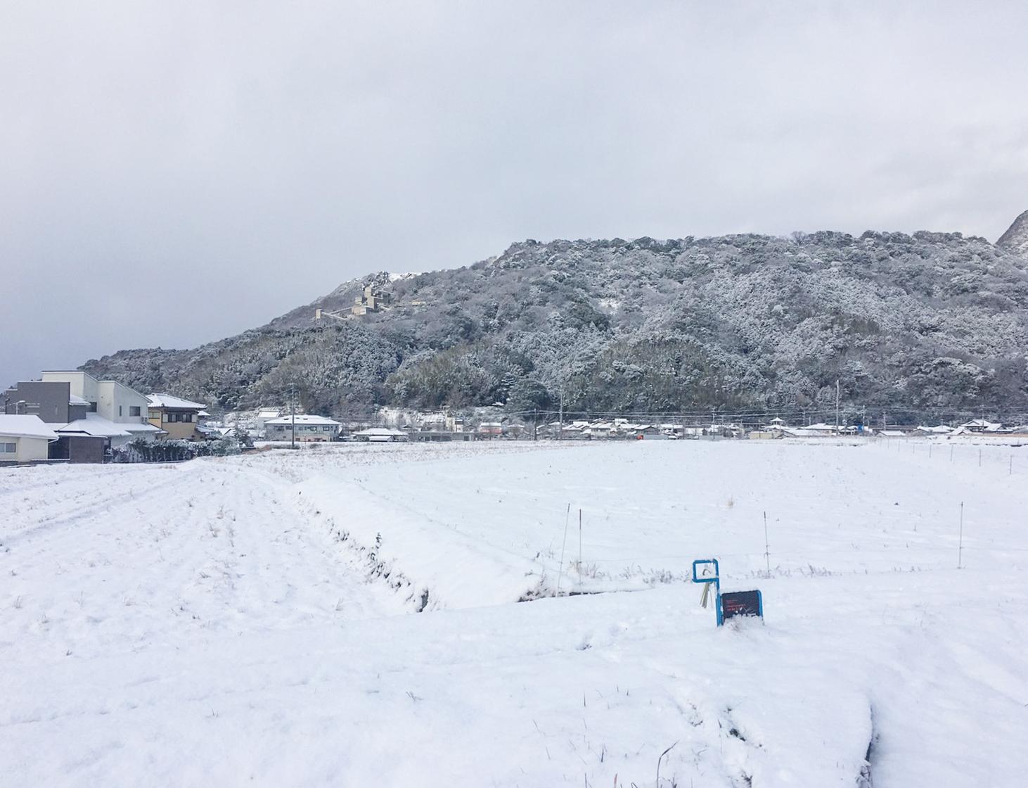 カワラダケの雪化粧